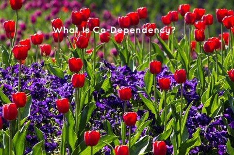 what-is-codependency