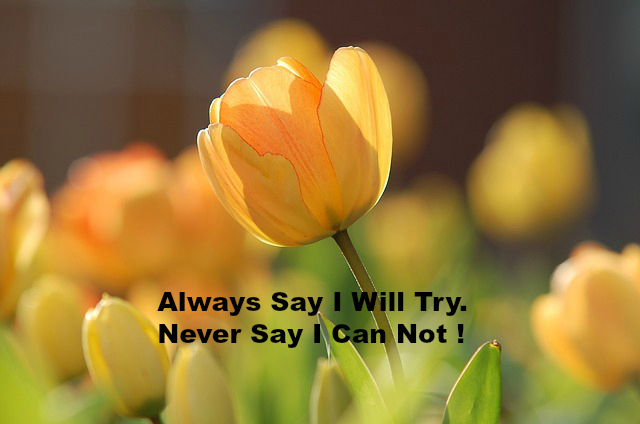 Always Say I Will Try. Never Say I Can Not !