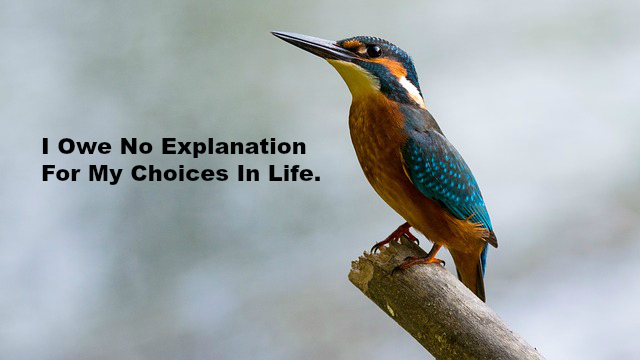 I Owe No Explanation For My Choices In Life.