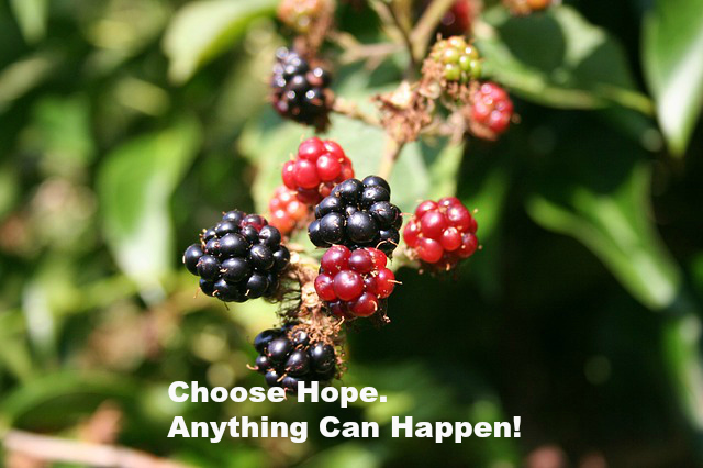 Choose Hope. Anything Can Happen